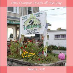 #PinkPumpkin #PhotoOfTheDay #SmithsAcresPumpkins #Tumbleweeds #Recordstore #Niantic