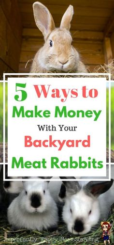 5 Ways to Make Money with Backyard Meat Rabbits. You can make an income and supplement your homestead and feed budgets. 5 simple ideas to help you make money with rabbits.