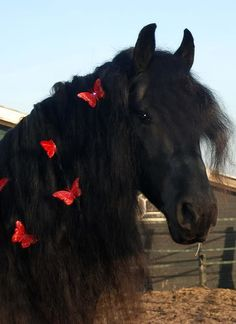 majestic black Friesian horse dressage show performace Andalusian Horse Mane Braids, Horse Braiding, Horse Hair, Most Beautiful Animals, Beautiful Horses, Beautiful Creatures, Cute Horses, Horse Love, Horse Costumes