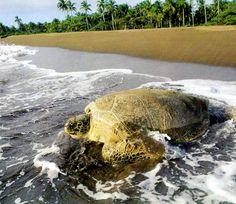 Tortoguero National Park in Costa Rica!