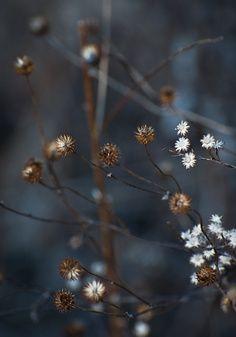 Flowersinmidwinter