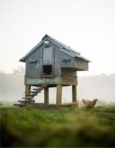 I can't believe it! Someone took a picture of our chicken coop and transposed a different color of paint! Lol!