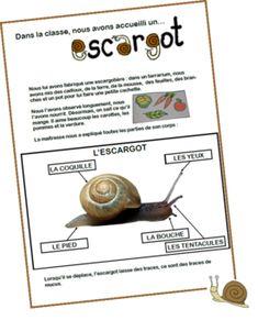 Elevage d'escargots Grande Section, Worksheets For Kids, Summer Crafts, Montessori, Homeschool, Language, Classroom, Activities, Children