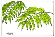 Plant Leaves, Plants, Plant, Planting, Planets