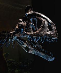 Cryolophosaurus   Photo by SK HO on 500px