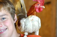 "Am I giving the kids scraps? ""Why the Kids Really Need a Little Red Hen Mama"" by Ann Voskamp"