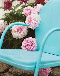 peonies + chair {Meadowbrook Farm}
