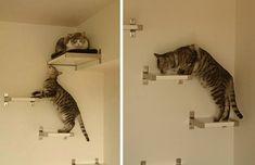 Esse gato está subindo ou descendo a escada? | Verdade Regional