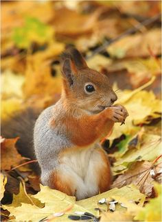 Fall #planet_animals #squirrel
