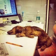 Giornata Mondiale dei Cani in Ufficio, Purina tenta di superarsi nel record :http://www.qualazampa.news/2016/06/24/giornata-mondiale-dei-cani-in-ufficio-purina-tenta-di-superarsi-nel-record/