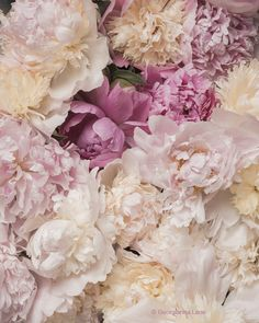 A dreamy photographic celebration of glorious peonies on my blog. http://georgiannalane.com/2014/05/peony-party.html
