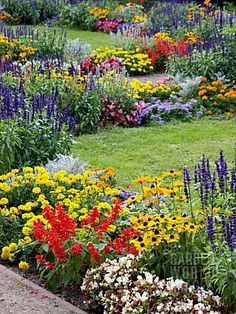 Garden Planning Awesome Pretty Cottage Garden Border Ideas 98 Image Cone Flowers Rudbeckia Sages Salvia and Marigolds Ta Es and 7 - Visit Link You Can Find More Pretty Cottage Garden Border Ideas Garden Shrubs, Shade Garden, Lawn And Garden, Garden Plants, Flowering Plants, Cut Garden, Zinnia Garden, Balcony Garden, Herb Garden