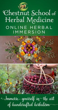 The Herbal Immersion Program Is The Most Comprehensive Online Course Teaching The Vital Skills Of Handcrafted Herbalism- - Growing Herbs, Making Medicine, Foraging, Botany, And Therapeutics. Pre-Registration Sale Running Now Through April Healing Herbs, Medicinal Plants, Natural Healing, Natural Herbs, Natural Foods, Natural Products, Herbal Remedies, Home Remedies, Natural Remedies