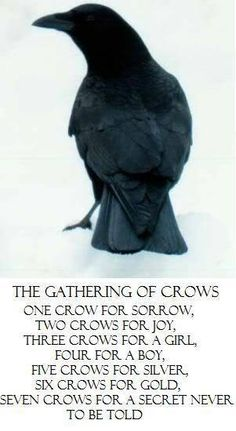 The Gathering Of Crows. It goes on... 8 for a wish, 9 for a kiss, 10 for a time of joyous bliss.