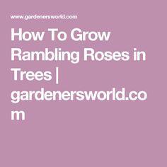 How To Grow Rambling Roses in Trees   gardenersworld.com