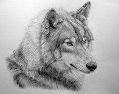 How To Draw Wolf Step By Step / Easy Drawing Lessons for Beginner