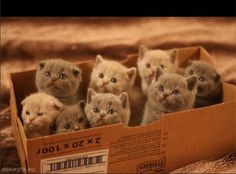 Thank You for ordering the Crazy Cat Lady Starter Kit!