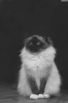 Katty!