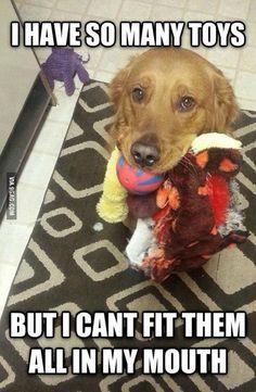 First World Problems Dog