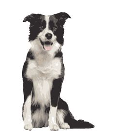 Quality Clip Art of Animals That Live On A Farm: Border Collie