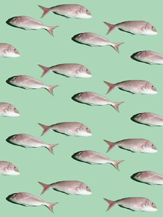Repetitive silver grey fish pattern on a green background Illustration Arte, Pattern Illustration, Illustrations, Motifs Textiles, Textile Patterns, Graphic Patterns, Print Patterns, Pattern Art, Pattern Design