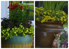 This video, from Lowe's Home Improvement, gives you a crash course in designing and creating a stunning container garden. The key to a foolproof, easy, and beautiful container garden is their three point method, using the thriller, the filler, and the spiller. The thriller is a knockout, dramatic plant, placed in the center. It may …