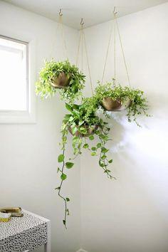 Indoor Plants: The Rug Seller's Handy Interior Plant Guide - Hanging plants indoor - Diy Hanging Planter, Diy Planters, Window Hanging, Balcony Hanging Plants, Hanging Gardens, Ceiling Hanging, Garden Planters, Planter Ideas, Concrete Planters