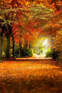 Beautiful Forest in Kaiserslautern -- This area is gorgeous in the autumn. A great place to walk...