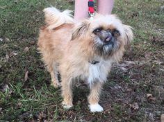 Poor little Angel was dumped at the shelter because her owner's couldn't afford vet care for her. She has a tumor that needs to be removed. She's only 2 years old and she's the sweetest little girl! She's got so much love in her little 8 pound body!...