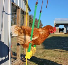 Chicken Swing and Poultry Supplies | Cackle Hatchery