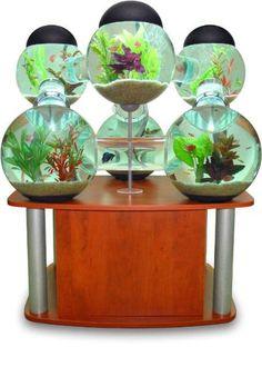 Um aquário com um formato completamente diferente. Além de se destacar nos ambientes, seus peixes irão adorar.
