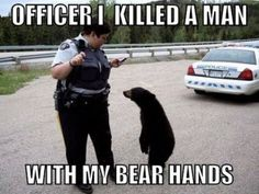 Bear confesses to murder