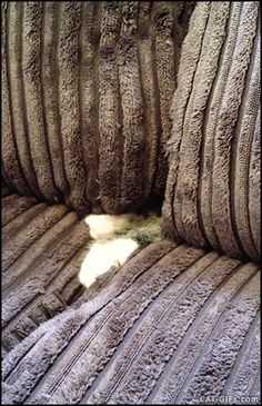 "CAT GIF • Funny Cat climbs out of sofa but then he retreats. ""Hey!… Pssst!… Wanna buy some catnip?"""