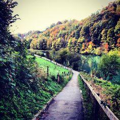 Berne Switzerland - Aare River #street #walk #autumn #forest