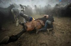 50 Astonishing Animal Photos of 2014 Fighters struggle with a wild horse during a traditional event in the Spanish village of Sabucedo, July 5, 2014.