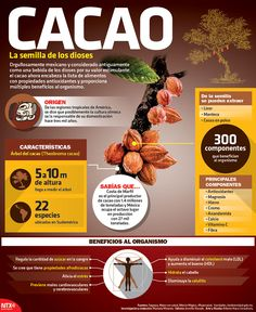 El cacao es un producto con propiedades que proporcionan beneficios al organismo. ¡Conócelo! #Infographic