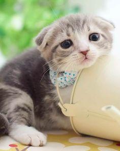 Kitten http://ift.tt/2FfYWkJ