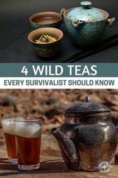 4 Wild Teas Every Survivalist Should Know — These teas can give you much needed nutrients and boost morale if you find your self lost in the woods #tea #wildtea #survival #survivalist #prepping #preparedness #prepper