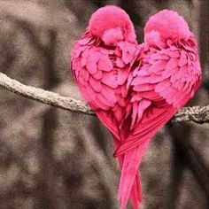 Pink Heart Love Birds, I think that this would be a really pretty tattoo idea. With the right artist of course Pretty Birds, Love Birds, Beautiful Birds, Animals Beautiful, Pretty In Pink, Beautiful Heart Images, Small Birds, Heart In Nature, Heart Art