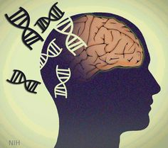 Wash U Study: Genetics Shows Schizophrenia Is Really Multiple Disorders - New research from Washington University suggests that schizophrenia is actually a group of eight distinct disorders, each with a different genetic basis.