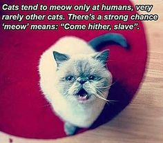 Cats Are The A-Holes Of The Pet World - 32 Pics