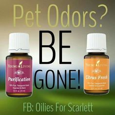 Pet odor removal with Young Living Essential oils!                                                                                                                                                                                 More