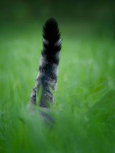 Where's kitteh?