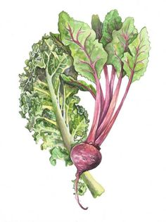 Kale and a Beet, by Alicia Severson