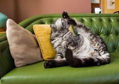 Kitty yoga.