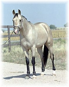Silver Buckskin Quarter Horse.... LOVE this Horse color ;-)