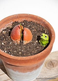 Everyone's tried growing plants from seeds, but it doesn't always work. Here's the way to grow an avocado plant from a pit that actually WORKS! Avocado Plant, Growing Plants, Irene, Planter Pots, Flowers, Royal Icing Flowers, Floral, Florals, Flower