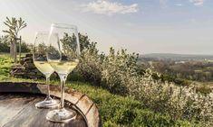 Jaro plné vína v Dolním Rakousku White Wine, Alcoholic Drinks, Glass, Drinkware, Corning Glass, White Wines, Liquor Drinks, Alcoholic Beverages, Liquor