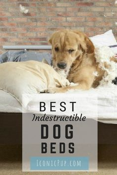 We look at the must have dog beds that withstands even the strongest dogs.