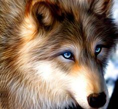 Lobo de olhos azuis